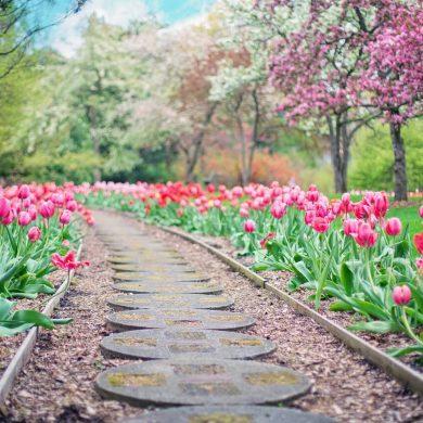Ktoré kvety prilákajú jar