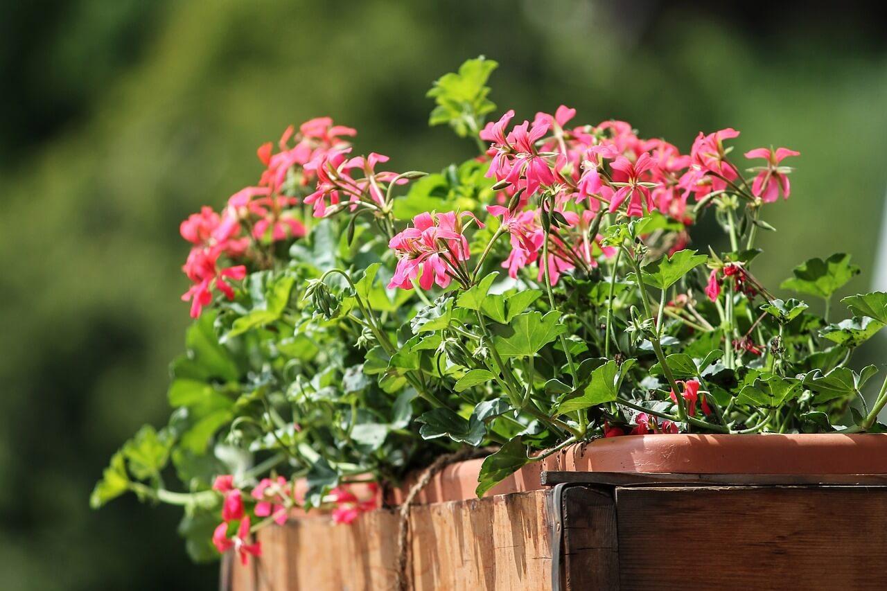 Balkonra való virágok