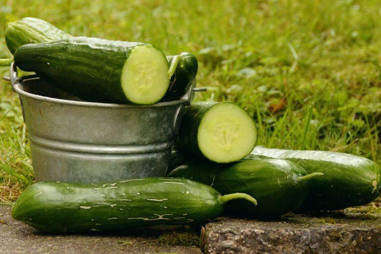 Pestujte uhorky