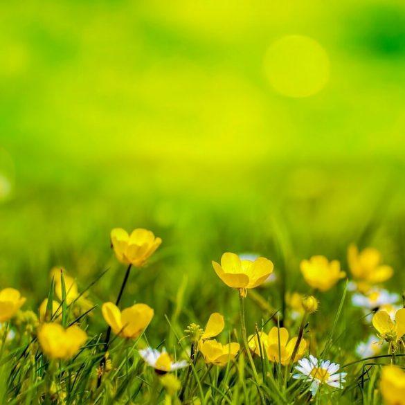 Pripravte si jarnú bylinkovú zmes
