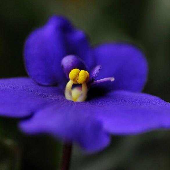 4 flori de cameră pentru a scăpa de dureri de cap