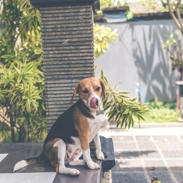 Ako zabrániť psovi, aby ničil záhradu