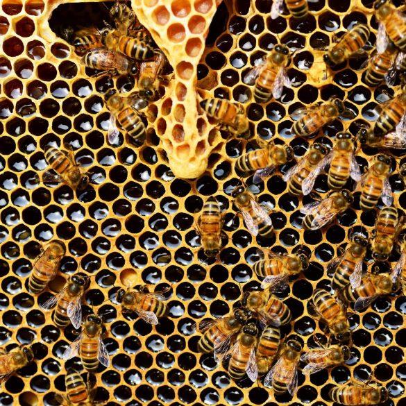 Včelí peľ pomôže pri alergiách