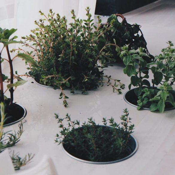 Ako si rozmnožiť bylinky