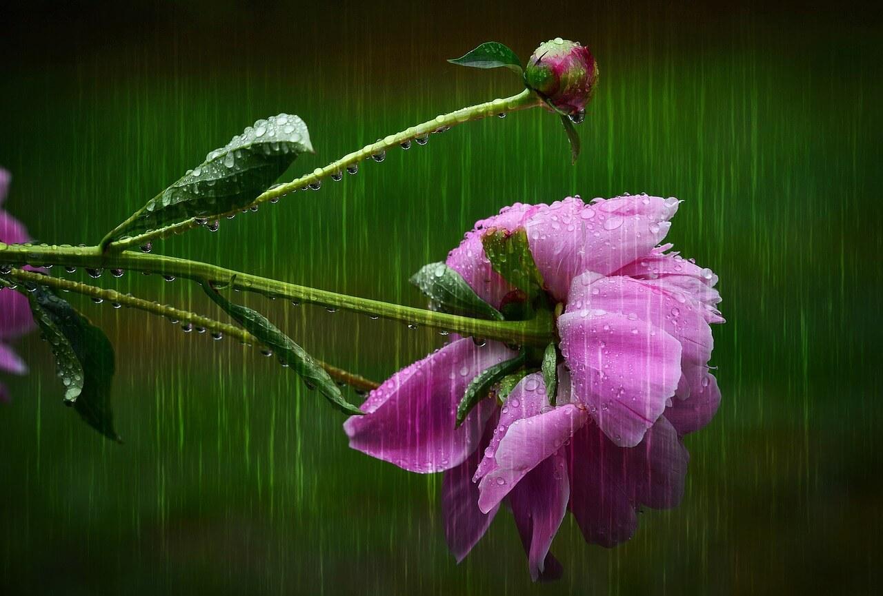Ako zbierať dažďovú vodu