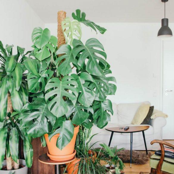 Cele mai elegante plante de interior
