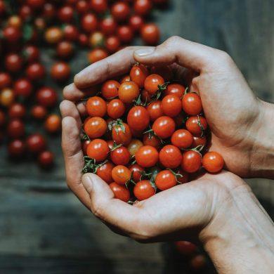 Ktoré rajčiny sa hodia na kečup