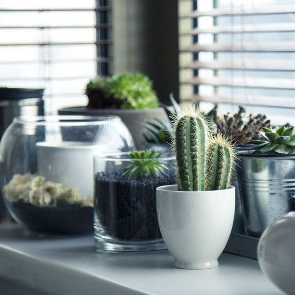 Valami nincsen rendben a szobanövényekkel?