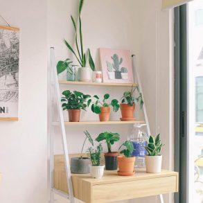 Čo potrebujú najčastejšie pestované izbovky