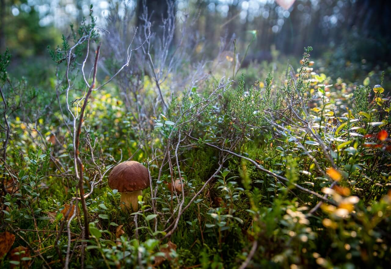 Jesenné dary lesa