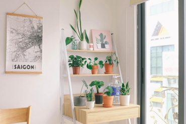 Ce necesită cel mai des plantele de cameră
