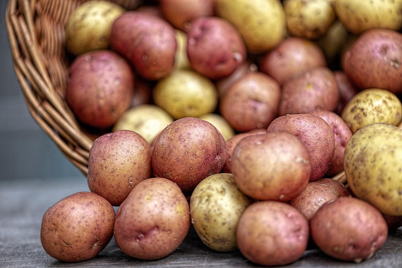 Nie všetky odrody zemiakov sú vhodné na dlhodobé skladovanie
