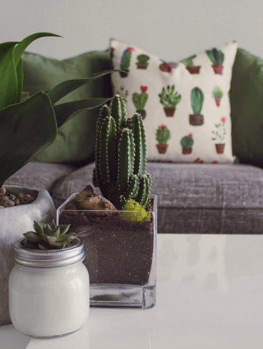 Tanácsok a szobanövények gondozására