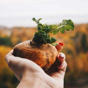 Ako skladovať zeleninu v zime