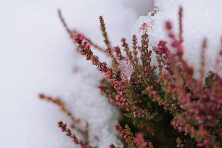 Hogyan téliesítsük a növényeket az erkélyen vagy a teraszon