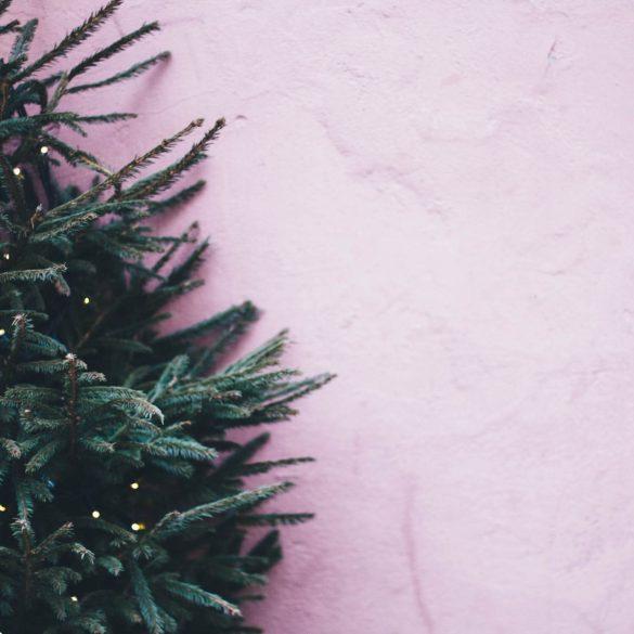 Ako si vybrať vianočný stromček?