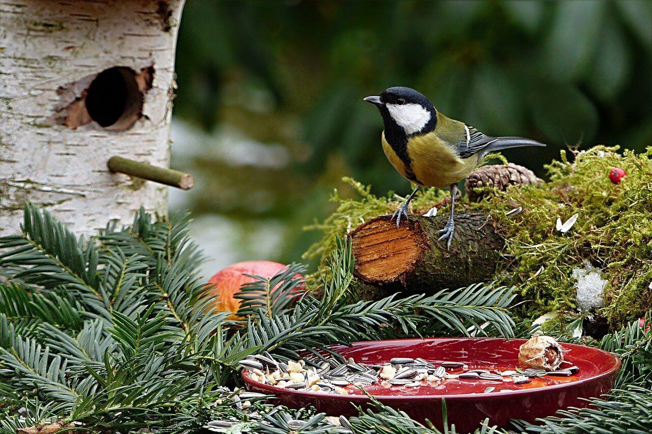 Sledovať vtáčiky