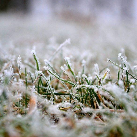 Cum să îngrijiți gazonul pe timpul iernii?