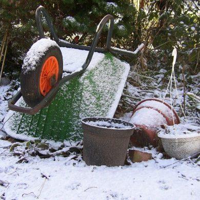 În grădină puteți lucra și în timpul iernii