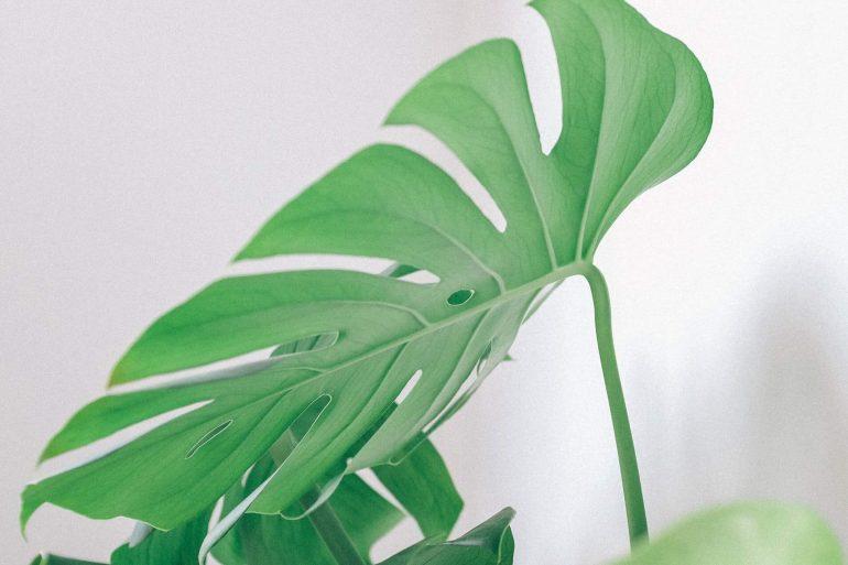Používate lesk v spreji na izbové rastliny?