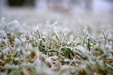 Ako sa starať o trávnik počas zimy?