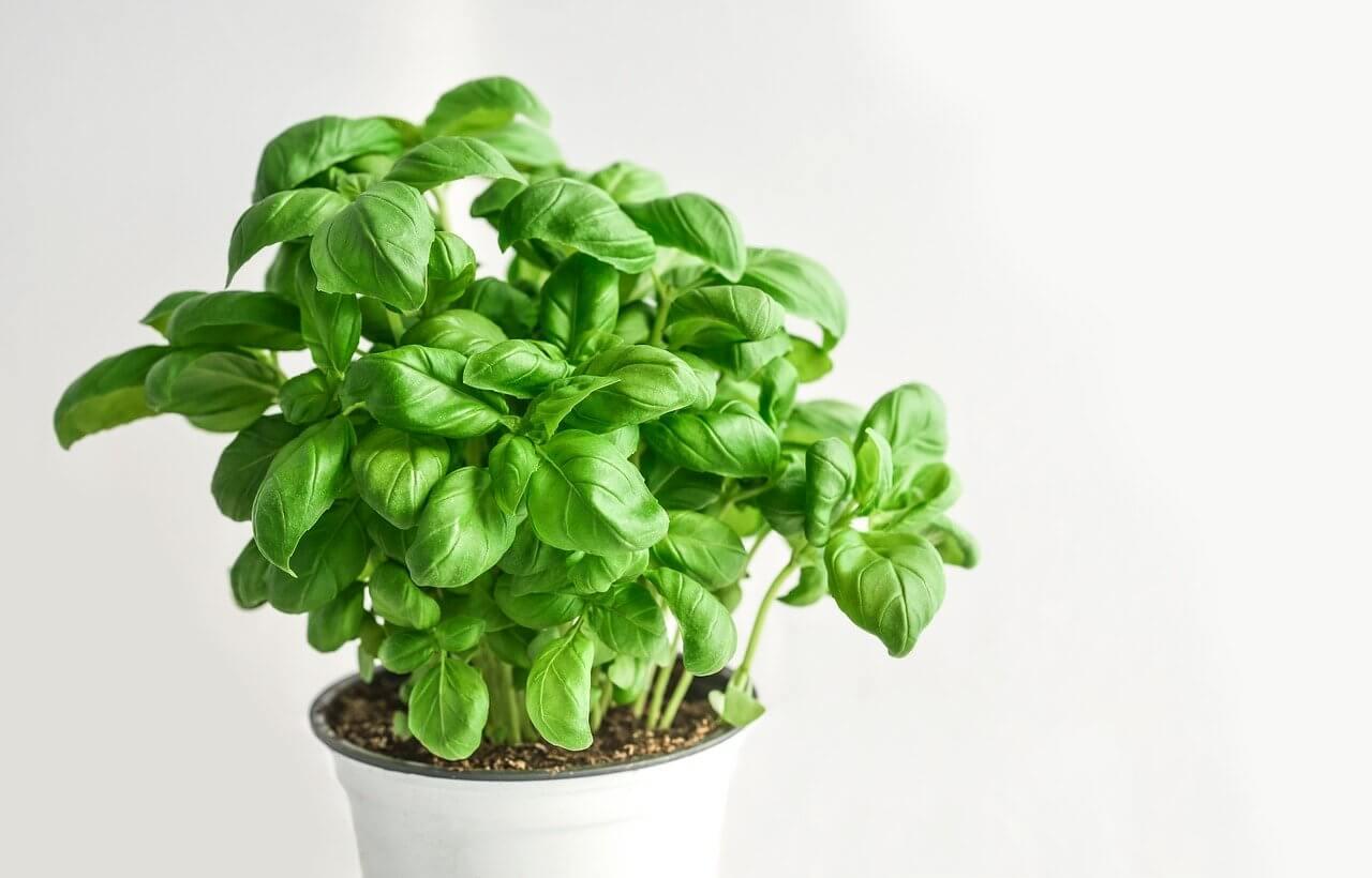 Fogyni akarsz? Íme 14 zamatos zöldfűszer, ami segít | stilusteremto.hu