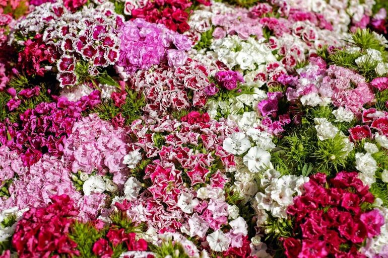 Aké kvetiny pestovať na balkóne