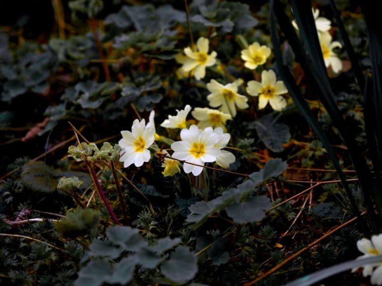 Liečivé bylinky z našich lúk a lesov