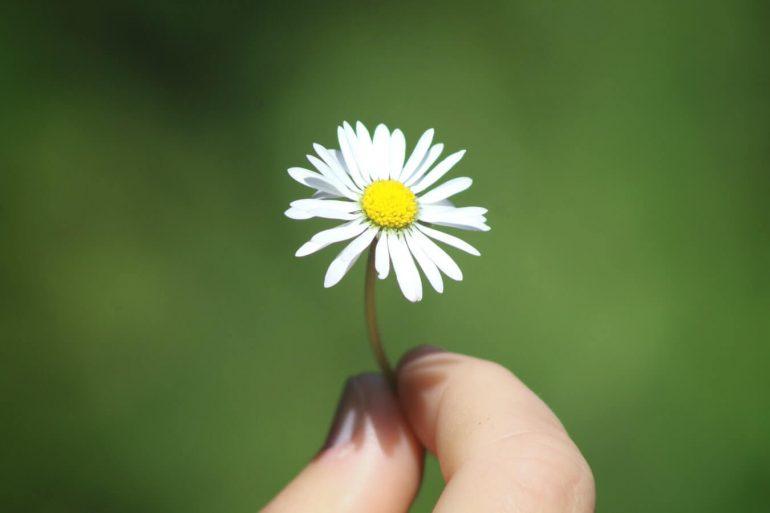 Gyógynövények a rétről és az erdőinkből