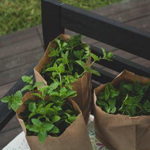 Ako si vybudovať bylinkový záhon?