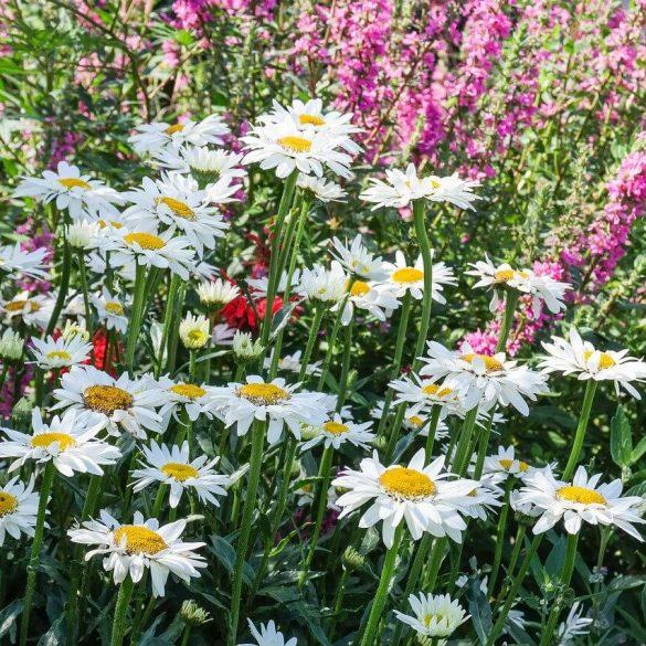 Vă amenajați un pat de flori cu plante perene?