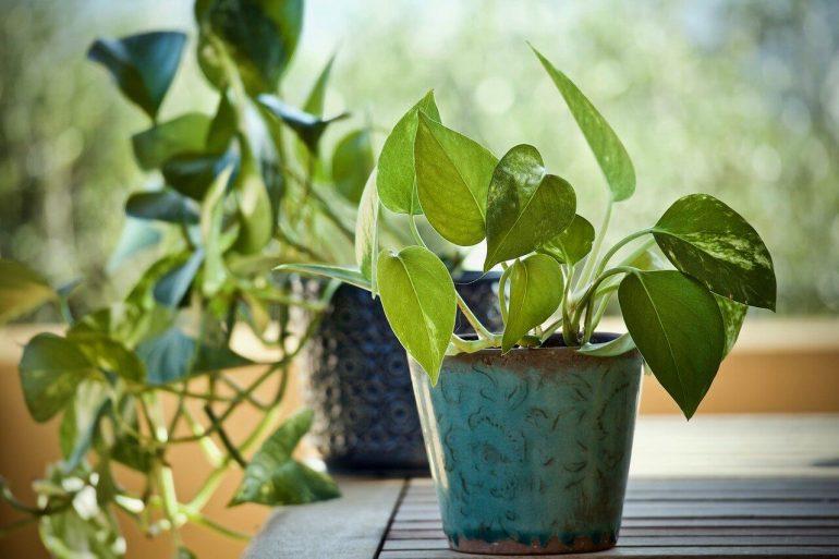 Ce fel de plante sunt potrivite pentru camera copiilor