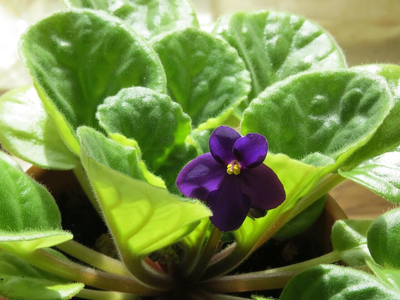 Ktoré rastliny sú vhodné do detskej izby?