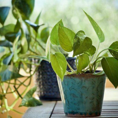 Aké rastliny sú vhodné do detskej izby