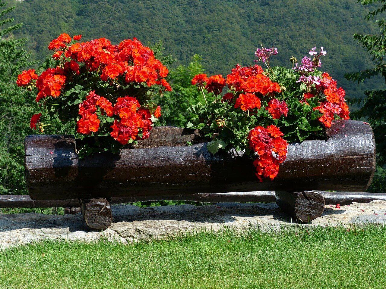Proti plesni na rastlinách
