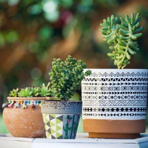 Ako pestovať sukulenty na balkóne