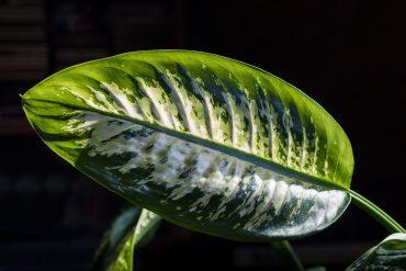 Acestea sunt plantele de cameră potrivite pentru umbră