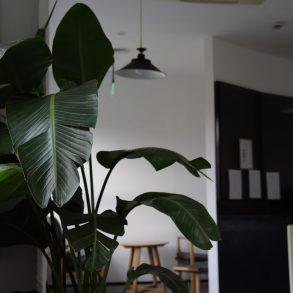Nu le merge bine plantelor Dvs. de cameră