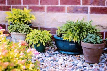 Oferiți-le plantelor de cameră ploaia de vară