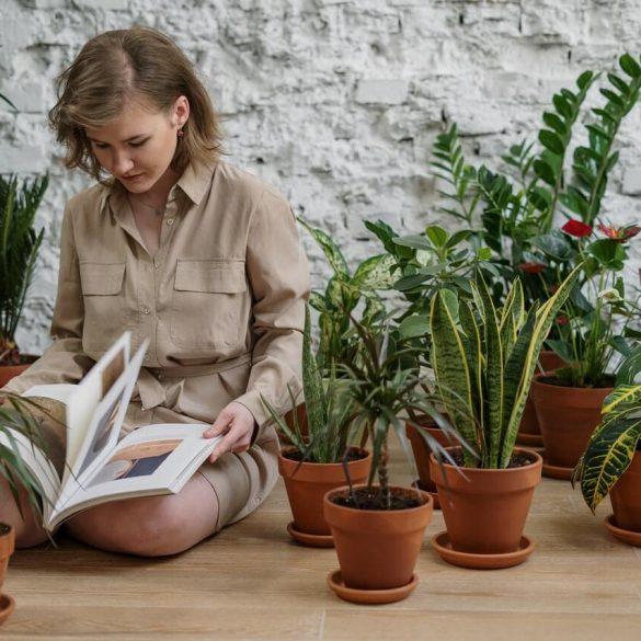 Mit tegyünk, hogy a szobanövények túléljék a nyári kirándulásunkat
