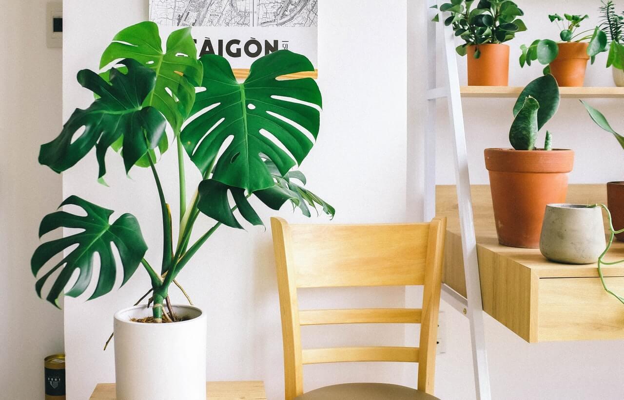 A skandináv stílusban uralkodnak a nem virágzó szobanövények