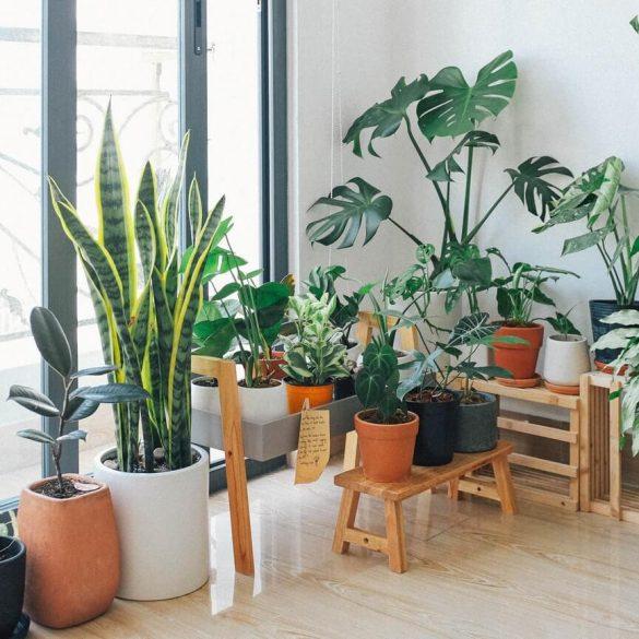 A skandináv stílus számára ideális növények