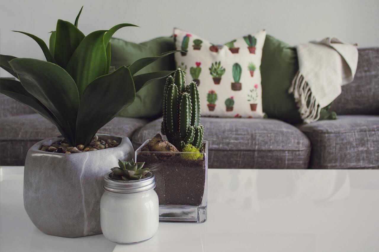 Nenáročné kaktusy a sukulenty