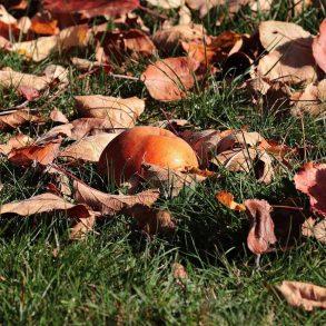 Čo robiť v záhrade počas jesene?