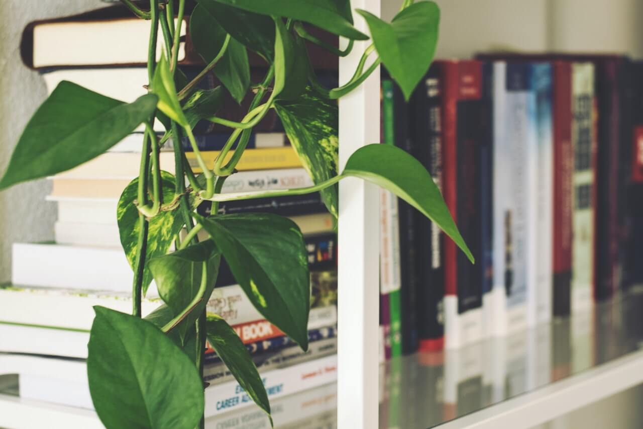 Knihy sú skvelé nielen na čítanie, ale aj ako dekorácia. P