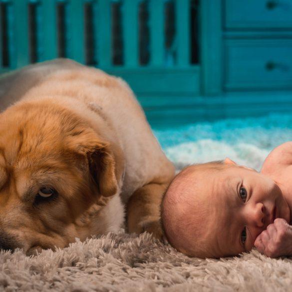 Kutya és baba egy lakásban