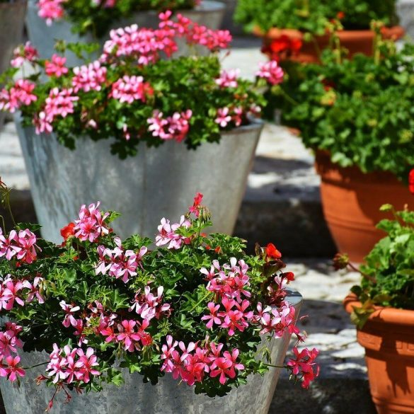 Vyberte si rastliny na balkón podľa orientácie na svetovú stranu