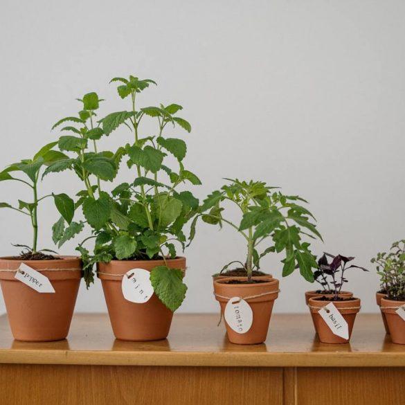 Zakladáme bylinkovú záhradu