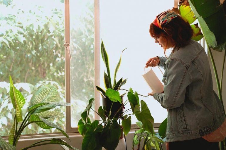 Aká voda je najlepšia na zalievanie izbových rastlín
