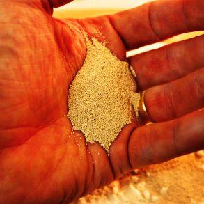 Poznáte lahôdkové sušené droždie